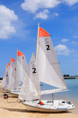 Several boats with sails — Stock Photo