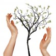 Hands and Money Tree — Stock Photo