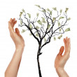 Royalty-Free Stock Photo: Hands and Money Tree