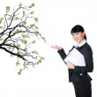 Money Tree — Stock Photo #2985340