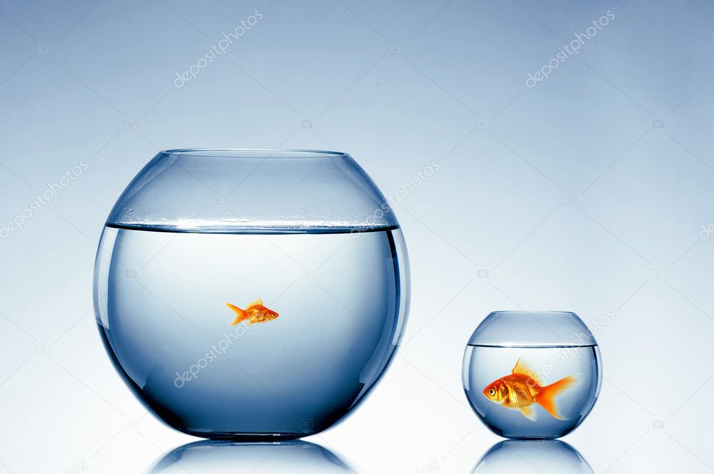 Goldfish swim in an aquarium  Stock Photo #3285599