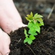Little green sprout - Stock Photo