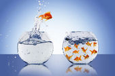 Goldfish jump — Stockfoto
