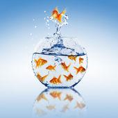 Salto de peixe dourado — Fotografia Stock