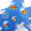 Goldfish and Aquarium — Stock Photo