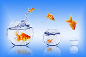 Goldfish jump — Stock Photo