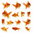 Goldfish — Stock Photo #3469469