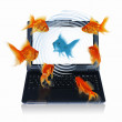 Goldfish and laptop — Stock Photo