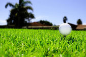 Golf ball on the green grass — Foto Stock