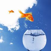 Goldfish and Aquarium — Stock Photo