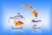 Goldfish jump — Stock Photo