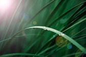 Drops of dew — Stock Photo