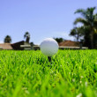 Golf ball on the green grass — Foto de Stock
