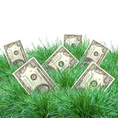 Vegetation of dollar bills — Foto Stock
