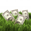 Vegetation of dollar bills — Stock Photo