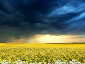 Exquisite landscape with stormy skies — Stock Photo
