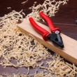 Shavings of wood - Stock Photo