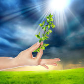 Hands holding a plant — Stock Photo