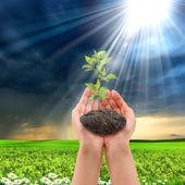 Mãos segurando uma planta — Foto Stock