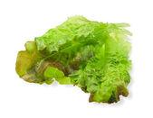 Liście sałaty — Zdjęcie stockowe