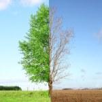 2 つの季節 — ストック写真