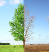 Two seasons — Stock Photo