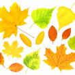 Autumn leafs - Photo