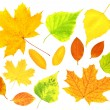 Autumn leafs — Stock Photo #3506073