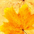 Autumn leafs — Stock Photo #3550104