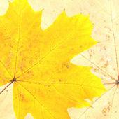 Herfst bladeren — Stockfoto