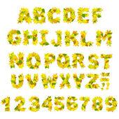 Jesień alfabet — Zdjęcie stockowe