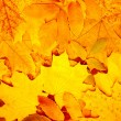 Foto Stock: Autumn leaves