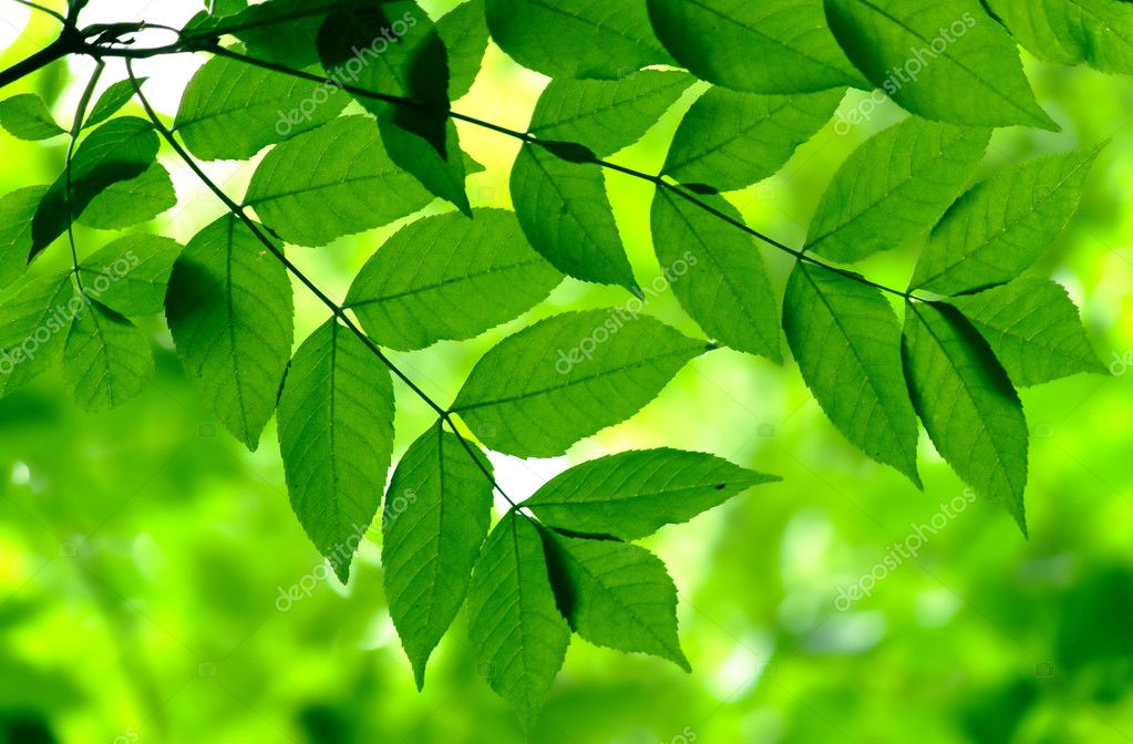 Green leaves in city park in the spring afternoon — Stock Photo #3392025