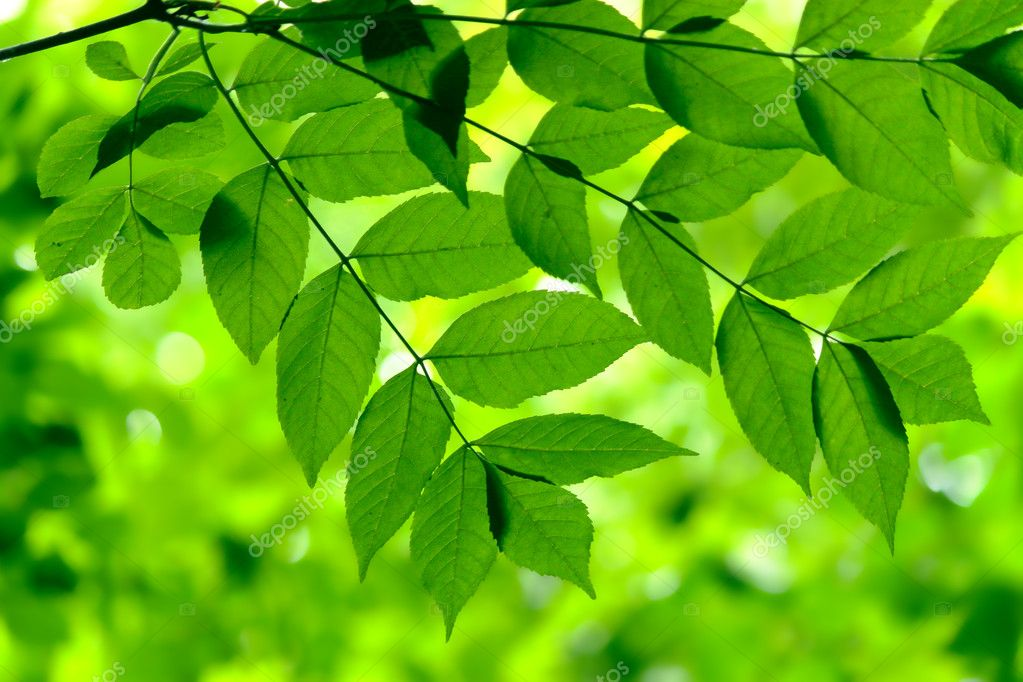 Green leaves in city park in the spring afternoon — Stock Photo #3392036