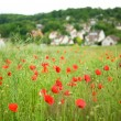 French countryside with beautiful blossoming poppies — Stock Photo