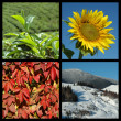 four seasons - nature collage — Stock Photo