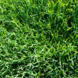 Green lawn — Stock Photo #2726745