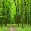 Green forest — Stock Photo #2727382