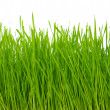 Green grass — Stock Photo #2779147