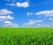 フィールドと雲 — ストック写真