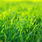 Lawn — Stock Photo #2780187