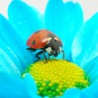 Ladybug on flower — Stock Photo