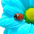 Ladybug on flower — Stock Photo #2780258