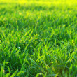 Green lawn — Stock Photo #2870569