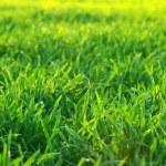 зеленый газон — Стоковое фото #2870569