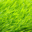 Green lawn — Stock Photo #3024168