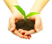 Roślina — Zdjęcie stockowe