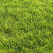 Green lawn — Stock Photo #3195040