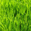 Green lawn — Stock Photo #3240777