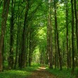 Forest - Foto de Stock  